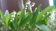 初夏の香り