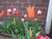 春はウキウキ♪