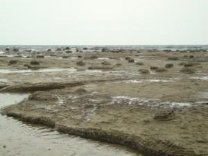 千畳ヶ浜きのこ石
