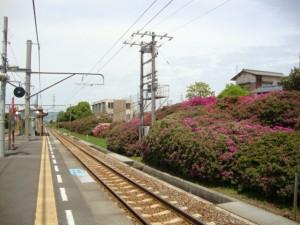 豊浜駅のつつじ