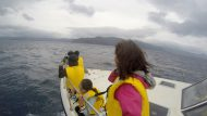 3月3日の誕生日に3頭のクジラに会った話。